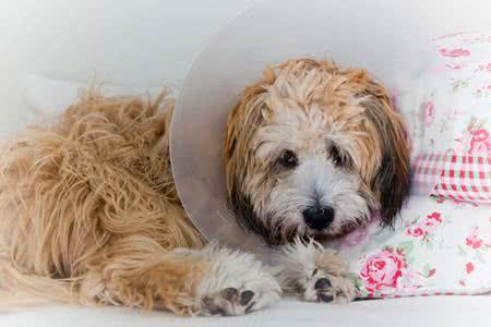 MoneyCheck | Hunde-OP Versicherung
