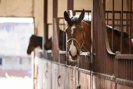 MoneyCheck | Pferdehalterhaftpflicht