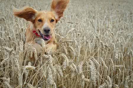 MoneyCheck | Tierversicherung
