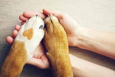 MoneyCheck | Hundeversicherung
