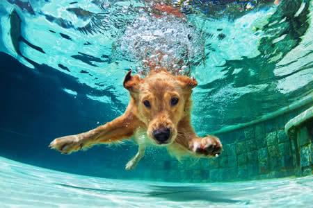 MoneyCheck | Hunde Kombiversicherung