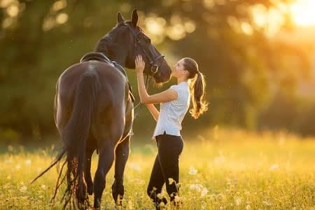 MoneyCheck | Pferdeversicherung