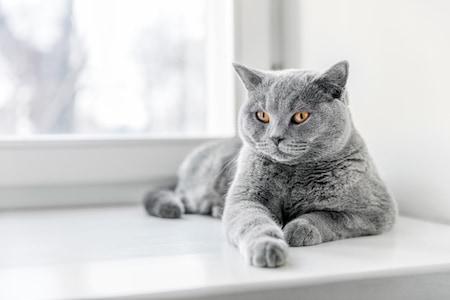 MoneyCheck   Uelzener Katzenversicherung