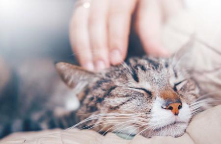 MoneyCheck | Provinzial Katzenversicherung