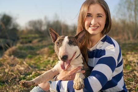 MoneyCheck   Hundehaftpflicht & Hundeversicherung Bullterrier