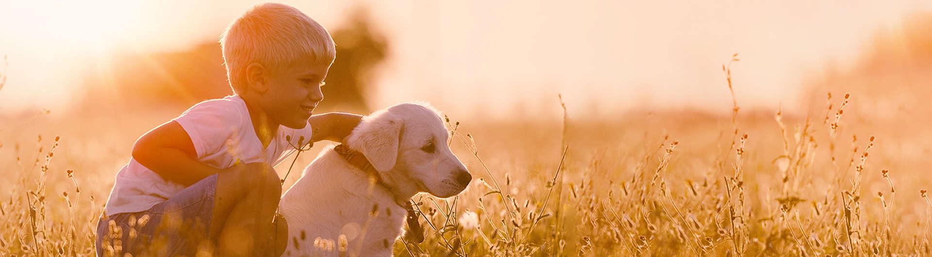 DEVK Hundehaftpflicht & Hundeversicherung