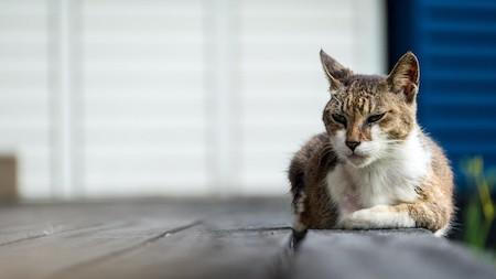 MoneyCheck | Katzenversicherung für ältere Katzen - auch ohne Altersbegrenzung