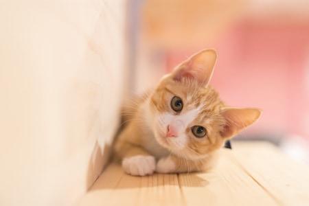 MoneyCheck | Katzenversicherung