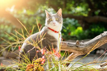 MoneyCheck | Katzenversicherung für Freigänger