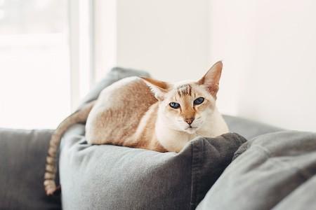 MoneyCheck | Katzenversicherung für Wohnungskatzen