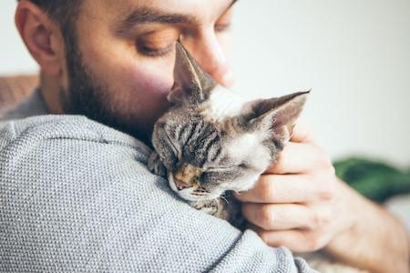 MoneyCheck   Katzenversicherung: Hauskatze richtig versichern