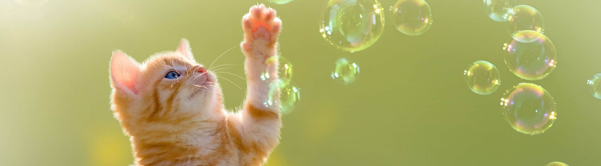 Katzenversicherung für Freigänger