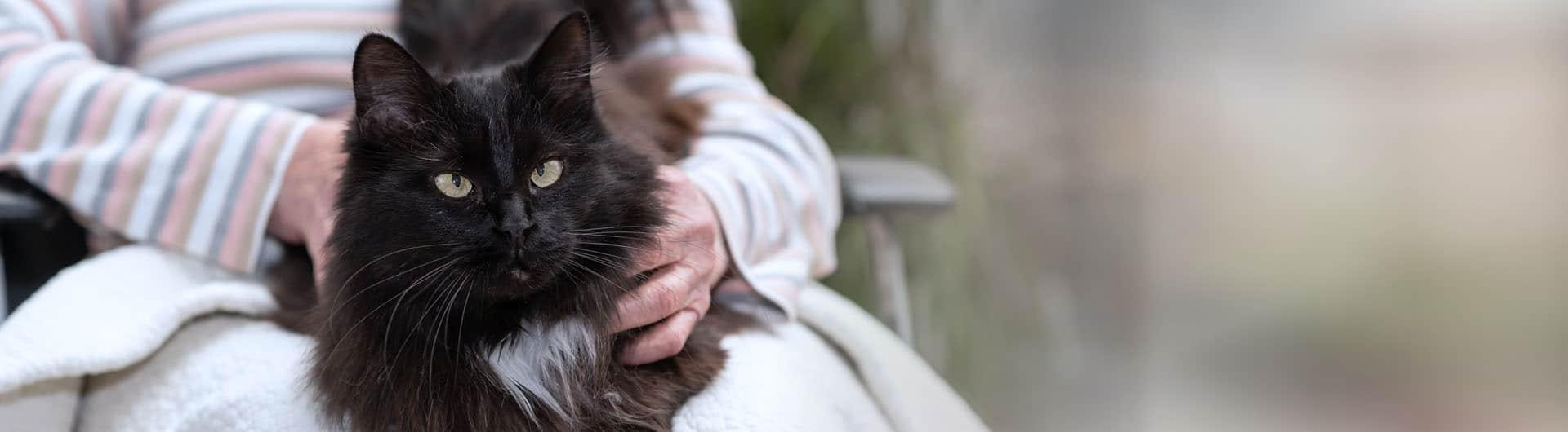 Katzenversicherung für ältere Katzen - ohne Altersbegrenzung